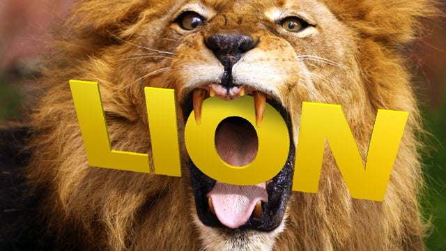 The OS X Lion Survival Guide