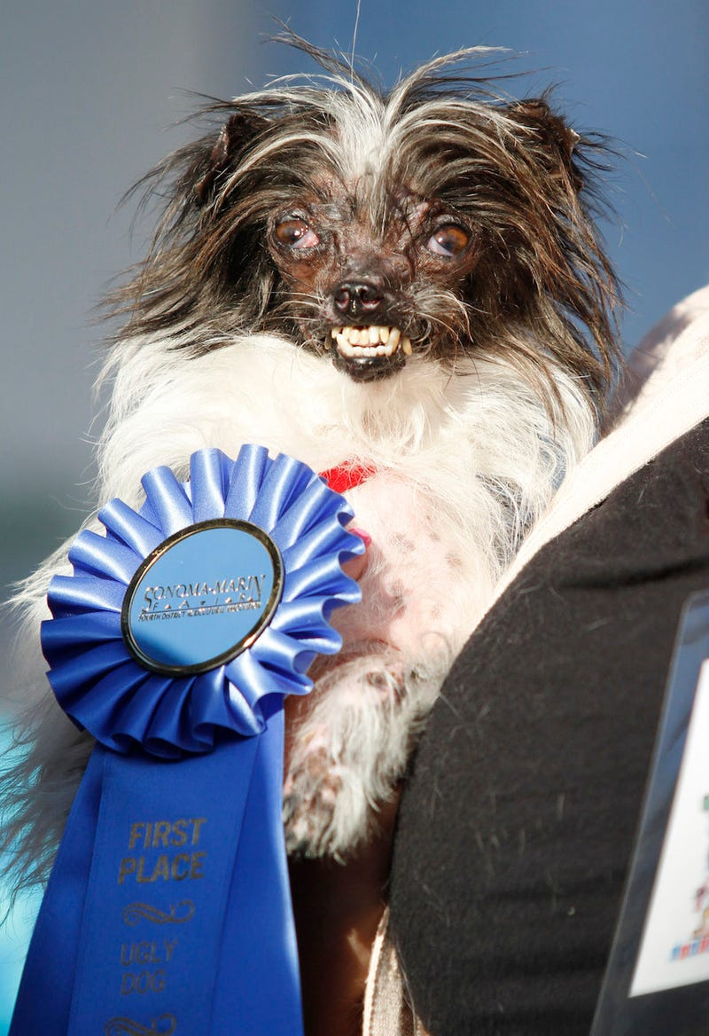 "Meet Peanut, The New ""World's Ugliest Dog"""