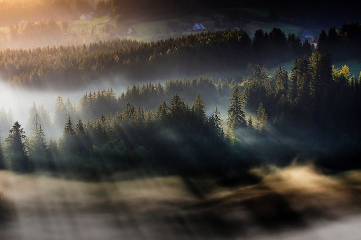 Forests, fog and light make these long-exposure photographs look like paintings