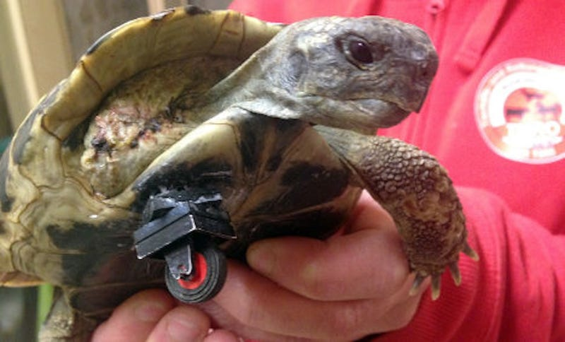 Lego wheel turns tortoise into a bionic turtle
