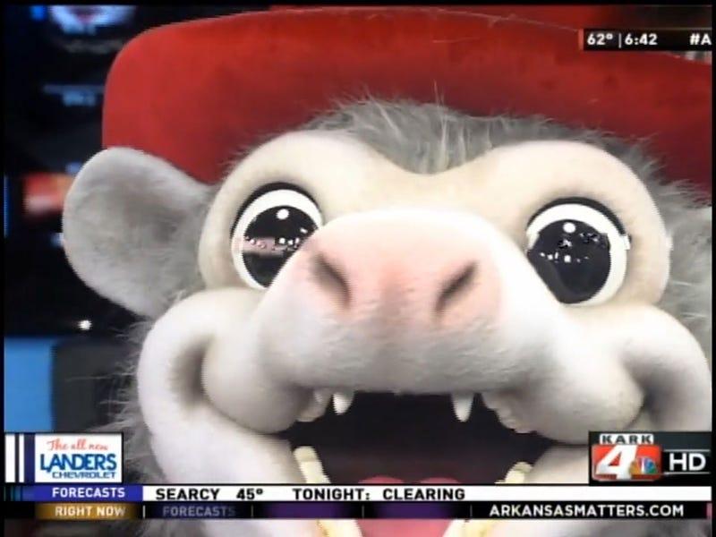 Arkansas Minor League Team Introduces Redneck Possum Mascot