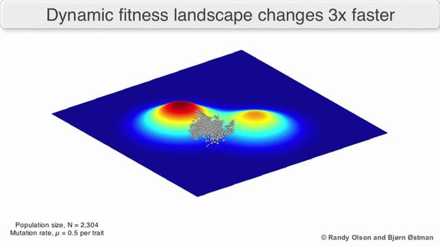 These Sweet 3D Fitness Landscapes Show Evolution At Work