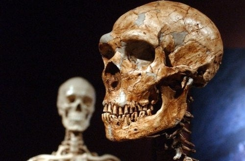 The brains of human and Neanderthal babies were almost identical