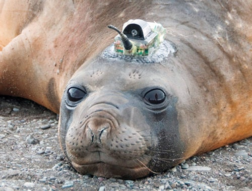 Seals Are Helping Chart the Ocean Floor