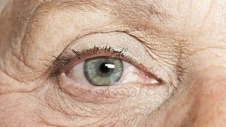 Científicos descubren cómo bloquear el envejecimiento de la piel