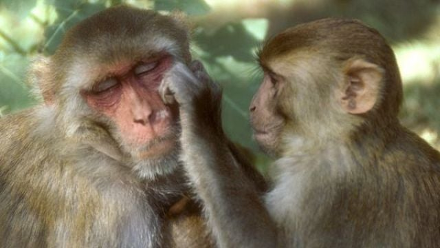 Monkeys experience regret over a game of rock-paper-scissors
