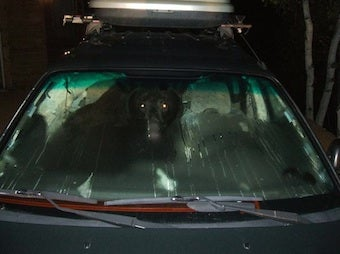 Does a Bear Steal a Car in the Woods?