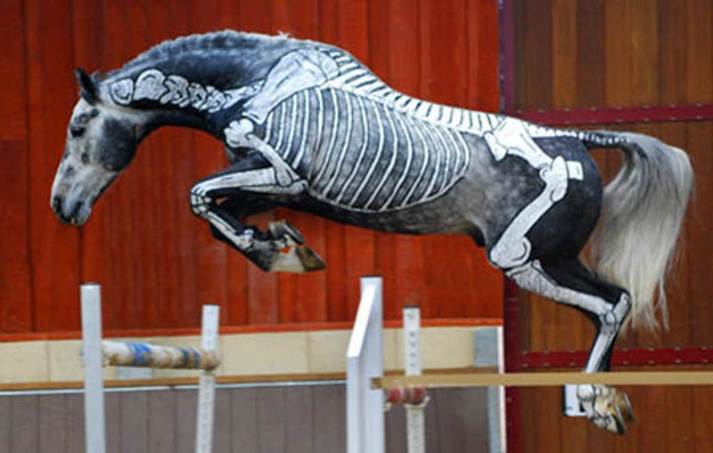 These inside-out horses are both creepy and cool