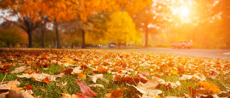 Why Do We Smell the Change of Seasons?