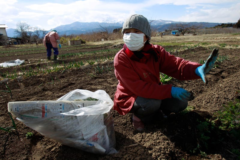 Brave People Are Building Futuristic Farms on Japan's Radioactive Soil