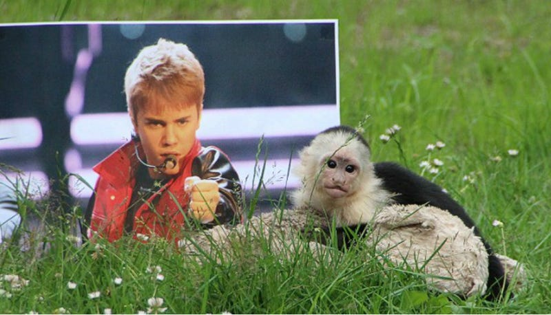 Justin Bieber's Monkey Adjusts to New Life in Germany