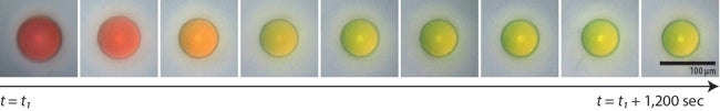Scientists Discover the Key to Making Paint That Never Fades