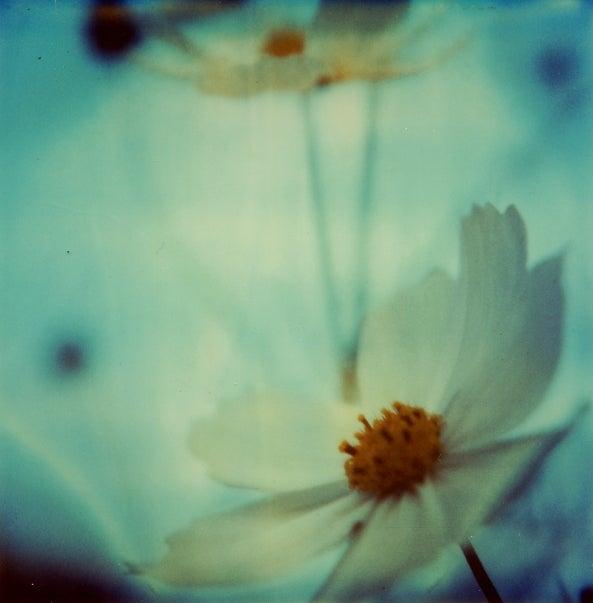 Polaroid SX-70: The Joy of Instant Photography Before Digital
