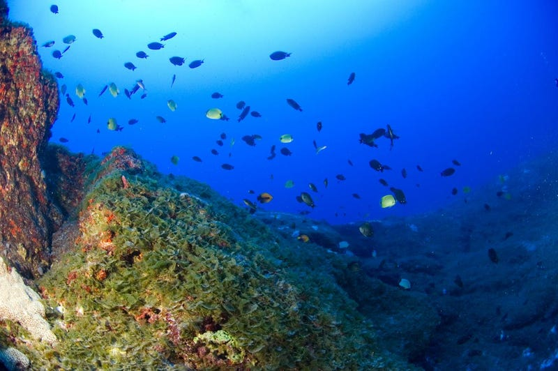 Exotic 'Twilight Zone' Reef Is Brimming With Unique Forms of Life