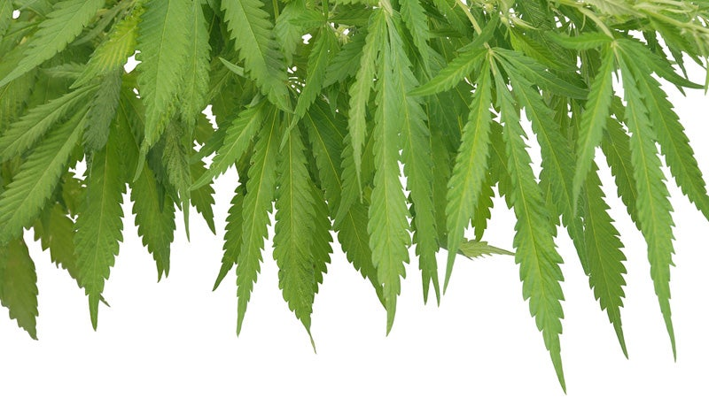 An Actual Bill to End the Federal Marijuana Prohibition