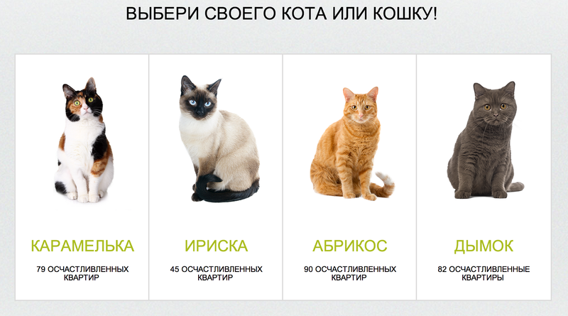 Russian Bank Will Give You a Free Cat With Your Mortgage