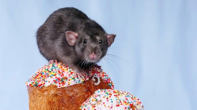 Man Celebrates 96th Birthday by Accidentally Eating Rat Cake