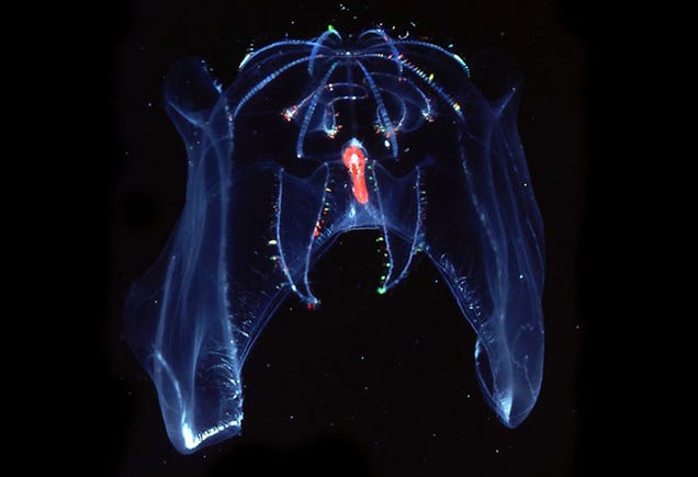 Check Out All the Alien Species Discovered By Deap Sea Vehicle Alvin