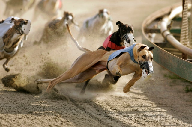 Greyhound Track Owners Now Want To Kill Off Their Own Industry
