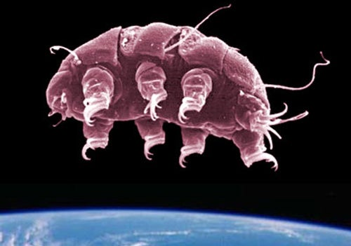 Meet the Tardigrades: The Solar System's Most Extreme Survivors