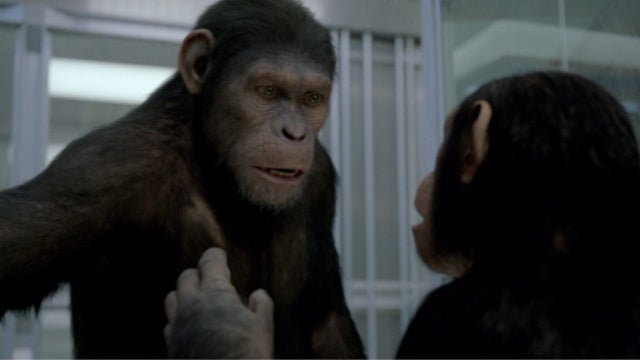 Rise of the Planet of the Apes might be the most realistic ape revolution movie ever