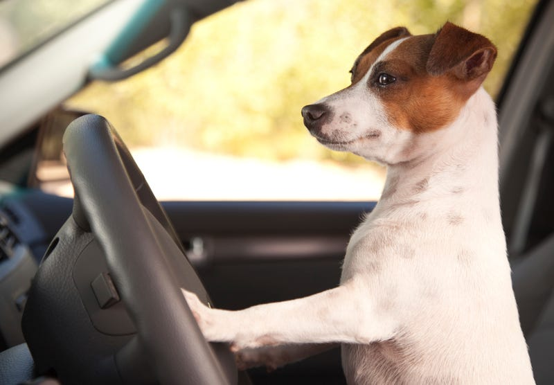 Road Tripping with a Dog: Advice?