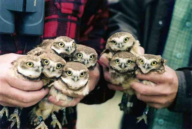 'Night Owls Open Thread