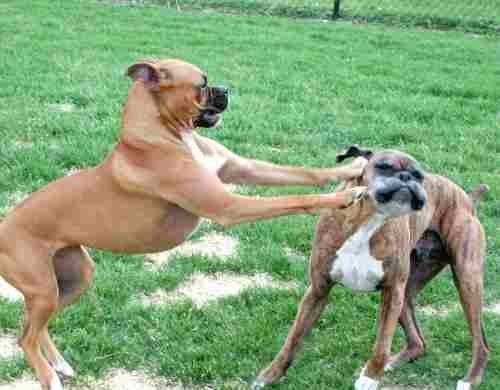 Morning Blogdome: Beware of Titsworth the Licking Boxer