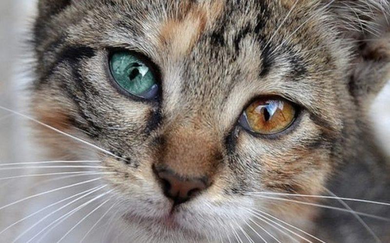 Why does this eyelash-enhancer turn your eyes brown?