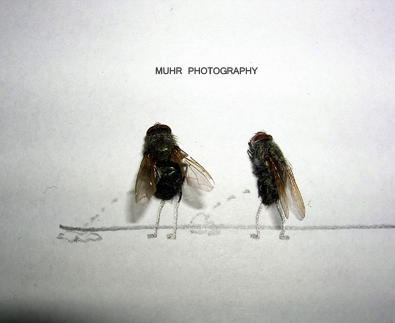 The Dead Fly Artwork Of Magnus Muhr