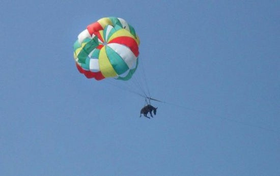 When Donkeys Fly: An Ad Campaign Gone Awry