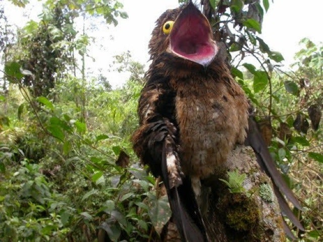 This Freaky Bird Looks Like a Cartoon Character