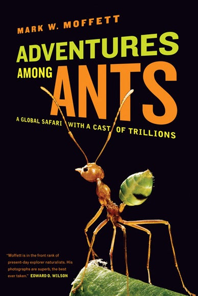 Why size doesn't matter: Ants and world domination