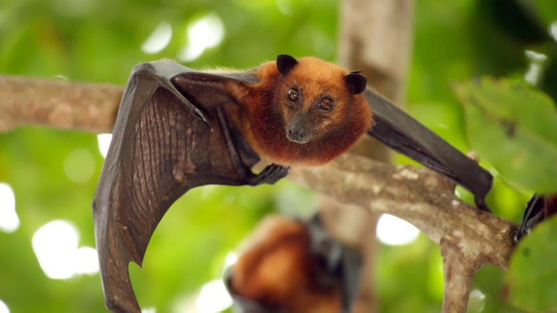 Creepy SARS-ish Virus Might Be Originating in Bats