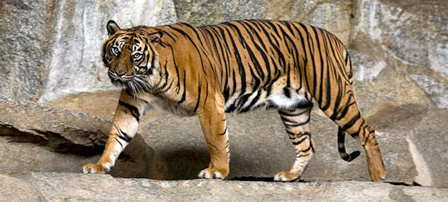 10 animals that might become extinct in the next 10 years