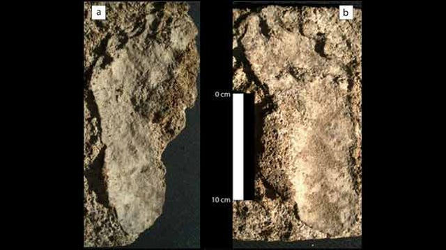 These are the oldest human footprints ever found in North America