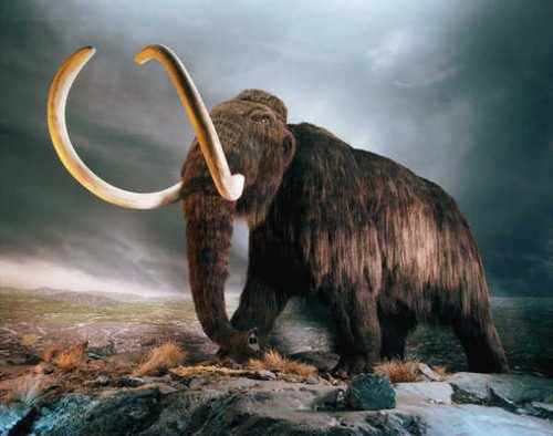 Mammoth Blood Brought Back to Life