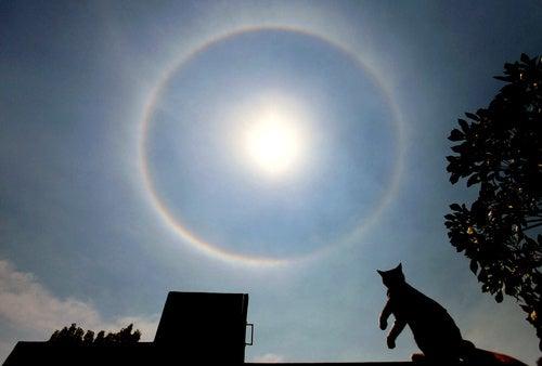 Sunbathing Cat Awed By Mighty 'Sundog'
