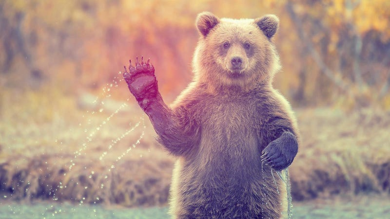 Give Your Desktop Good Vibes with These Awesome Animal Wallpapers