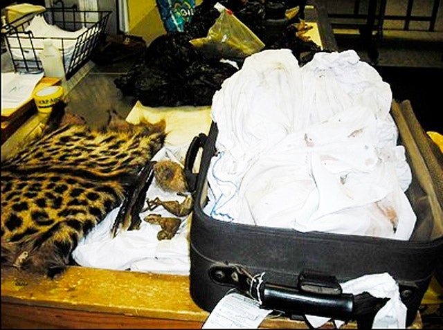 Bloody Suitcase Full of Dead Animals Arrives at Dulles Airport