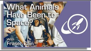 What Animals Have Been To Space?