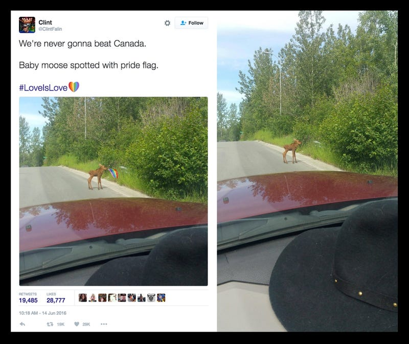 That Photo of a Baby Moose With a Pride Flag is Fake