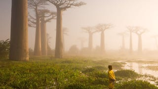 These Ancient Trees Look As Though They Belong In An Alien Forest