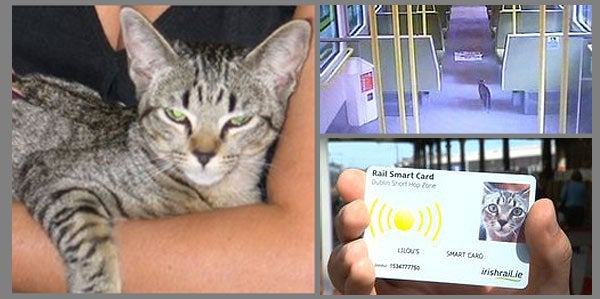 Runaway Cat Boards Train, Reunites With Owner Through Twitter