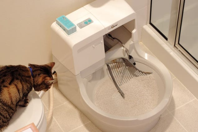 how to make your cat use the toilet