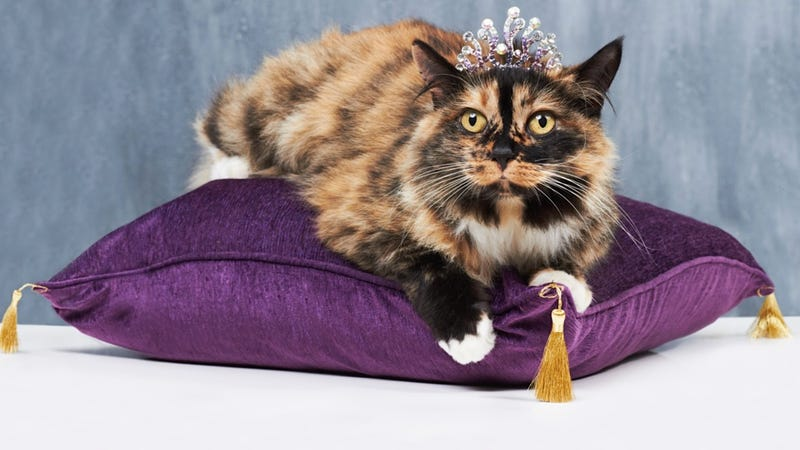 A Guide to Determining If Your Pet Is a Spoiled Rotten Asshole