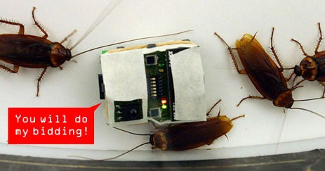 Roaches Follow Robot Overlords to Certain Doom, Studies Show