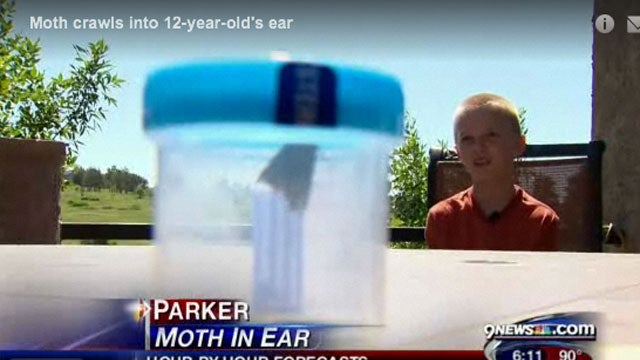 What To Do When a Moth Crawls Inside Your Ear