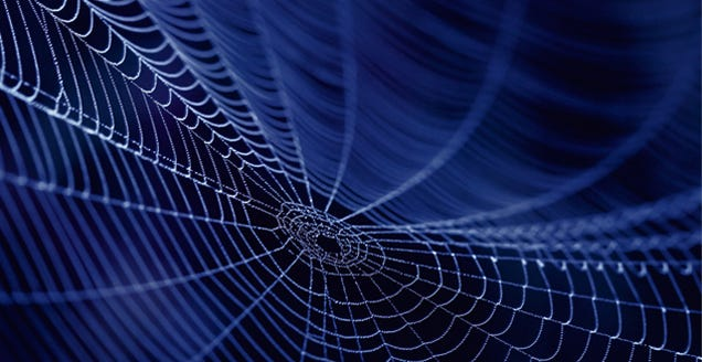 In The Future, Spider Silk May Help Grow Your Replacement Heart