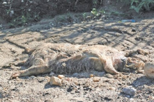 Another Dead Monster Reported In Long Island